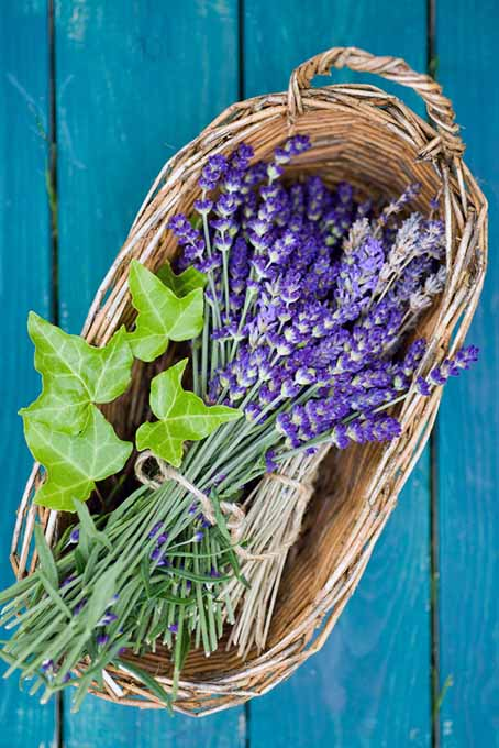Basket of Lavender | Foodal.com