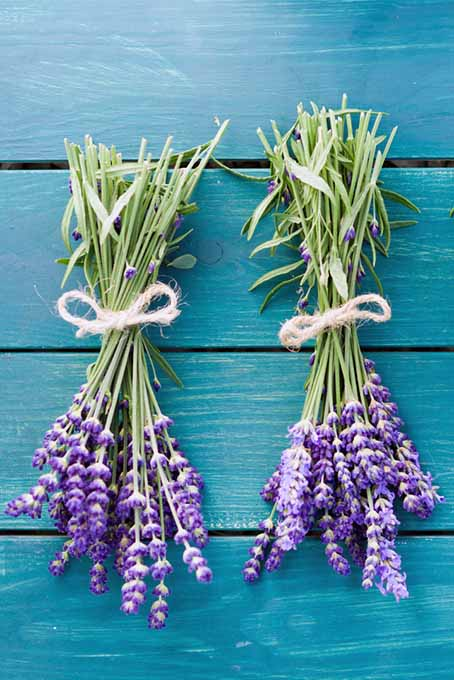 Bunches of Lavender | Foodal.com