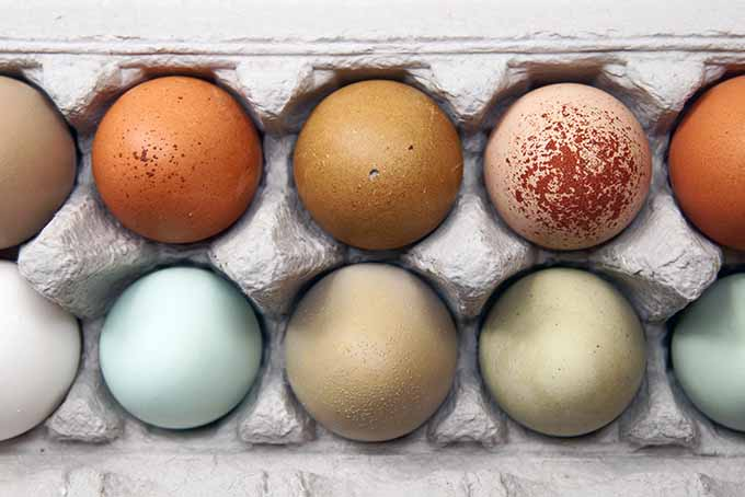 Carton of Multicolored Eggs | Foodal.com