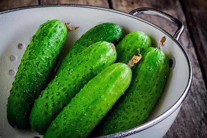 Cucumbers in a Colander | Foodal.com