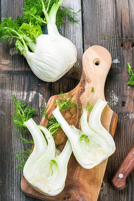 This tasty vegetable is not well known by many home home cooks but it offers many surprising health and culinary benefits. Read more now at https://foodal.com/knowledge/how-to/store-and-use-fresh-fennel/