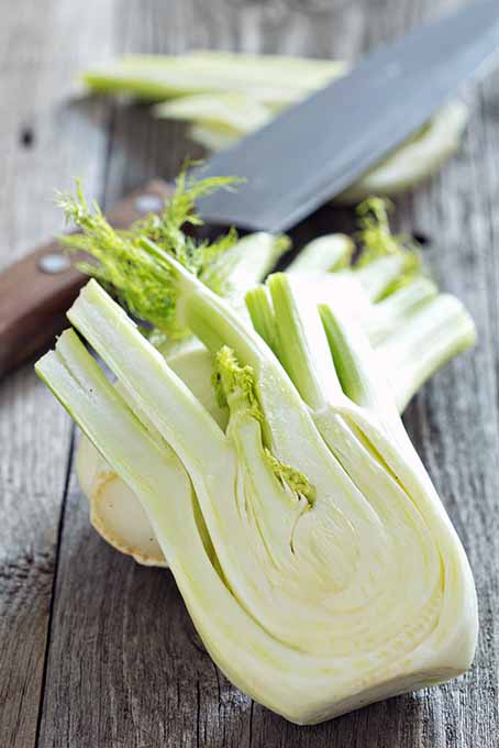 This fresh vegetable is perfect to use in raw salads & light dishes. Learn its many uses and benefits- read more now! https://foodal.com/knowledge/how-to/store-and-use-fresh-fennel/