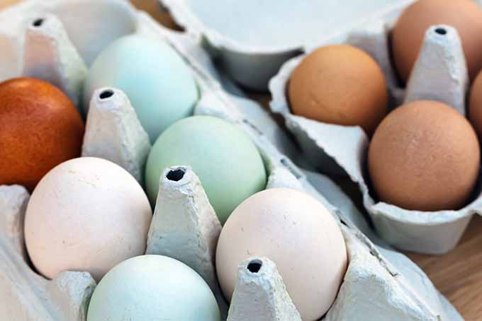 Multicolored Eggs in Cartons | Foodal.com