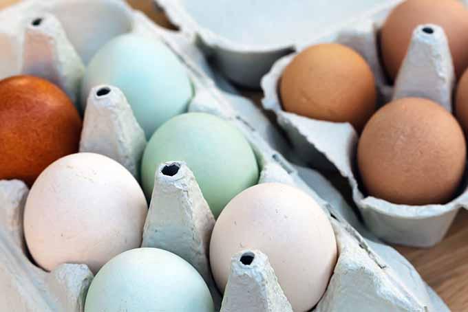 Multicolored Eggs in Cartons | Foodal.com