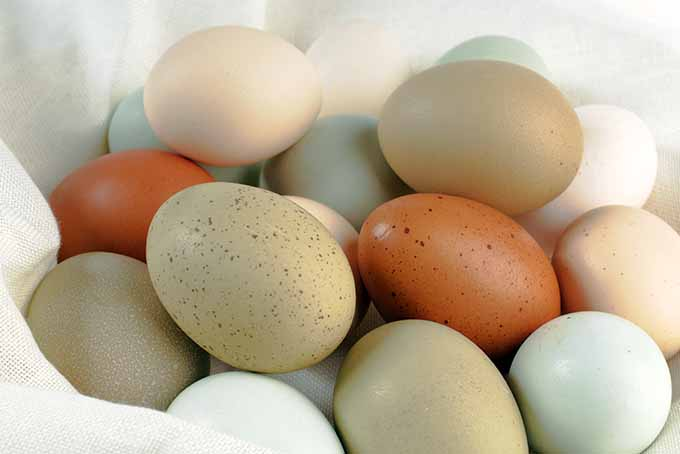 Multicolored Eggs on White Fabric | Foodal.com