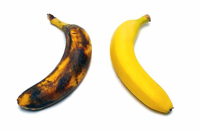 Overripe and Yellow Bananas | Foodal.com