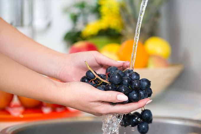 Washing Grapes | Foodal.com