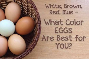 White, Brown, Red, Blue – What Color Eggs Are Best for You?
