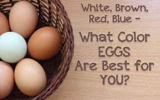 What Color Eggs Are Best? | Foodal.com