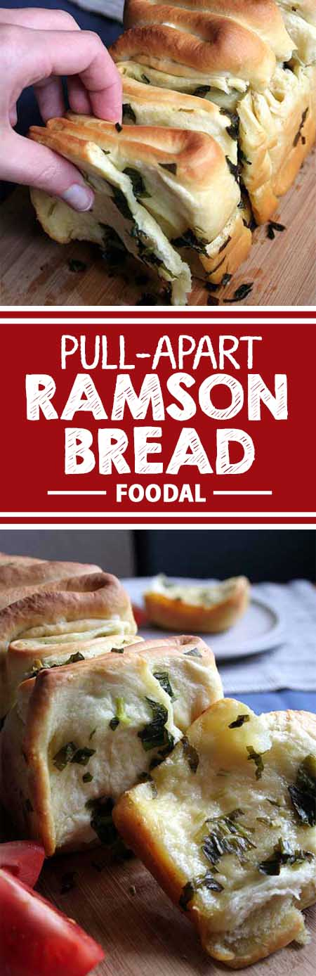 Ramson is a fabulous herb with a fresh and tangy taste. Use this garlic-flavored plant in a variety of recipes, like our superb pull-apart bread. Get the recipe on Foodal now!