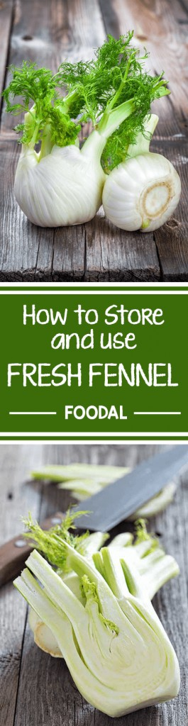 Start your spring the healthy way with fennel. This fresh vegetable is perfect to use in raw salads, light dishes, meat, or vegetarian recipes. It can be prepared in many ways, and offers various health benefits. Learn the many uses of these flavorful bulbs right in your own kitchen! Read more now on Foodal. https://foodal.com/knowledge/how-to/store-and-use-fresh-fennel/