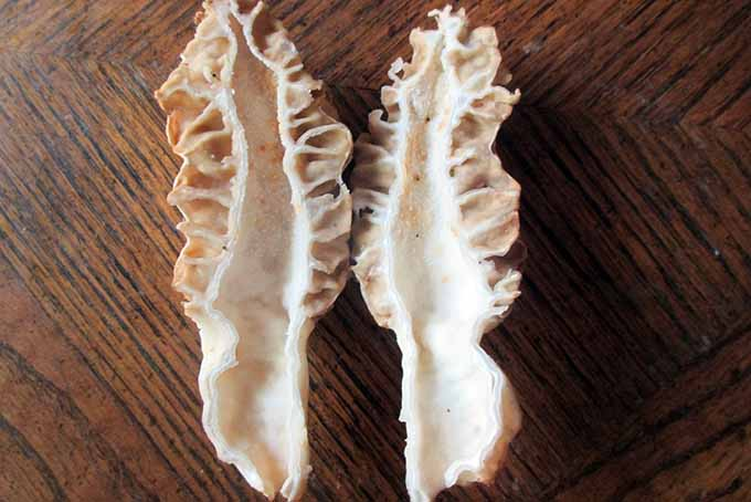 Morel Cut Test | Foodal.com