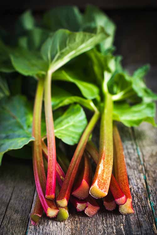 You know it's spring when you see rhubarb, and the smell of rhubarb pie wafts through the air. What else to do with this seasonal veggie though? Check out our suggestions, hints, and even health tips right here at Foodal: www.foodal.com/knowledge/paleo/rhubarb