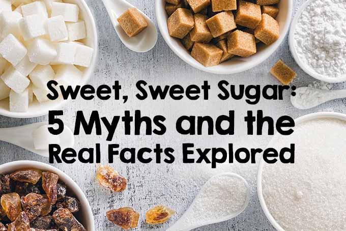 Sweet Sugar Myths and Facts | Foodal.com