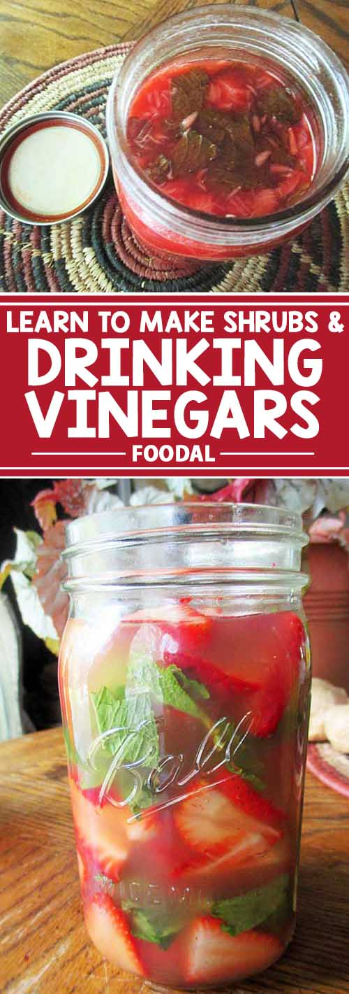 Shrubs and drinking vinegars – what are they? For starters, they're a refreshing and healthy mix of fruits fermented with sour vinegar. Trendy today in juice and cocktail bars, you can make your very own at home. Add them to your favorite alcoholic beverage, or craft your very own healthy mocktails! Learn their health benefits and how to make them, right here at Foodal.