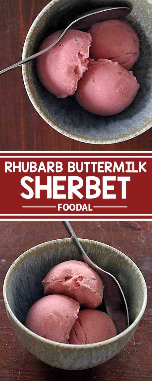 Tart and Creamy Rhubarb Buttermilk Sherbet