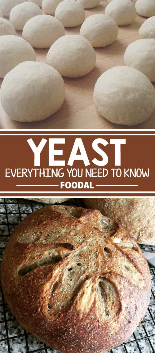 Yeast: Everything You Need to Know