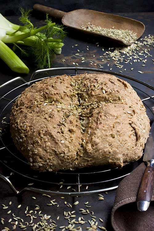 Fennel seed can be used in sweet or savory culinary applications, like this delectable fennel bread. Read more on Foodal: https://foodal.com/knowledge/herbs-spices/fennel-seed/