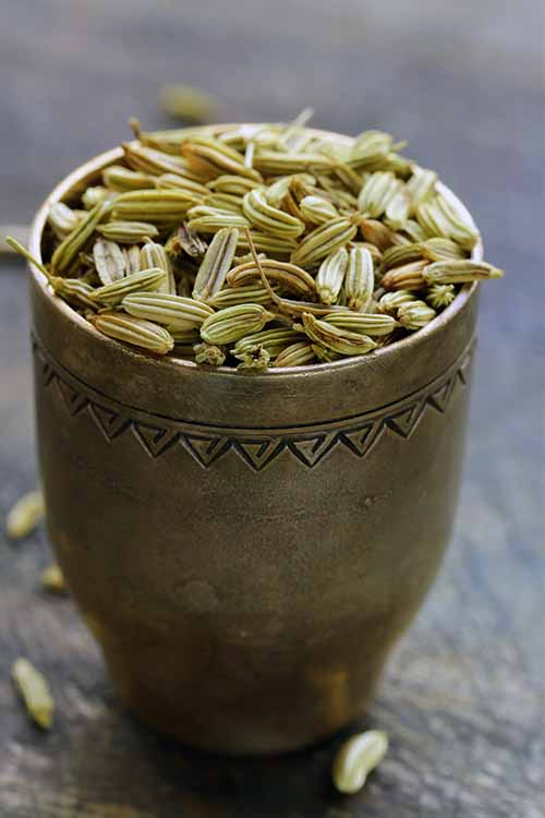 Fennel seed is a fantastic addition to your spice rack. It can be used to season lots of dishes, whether meat, fish, or vegetarian. Read more now on Foodal: https://foodal.com/knowledge/herbs-spices/fennel-seed/