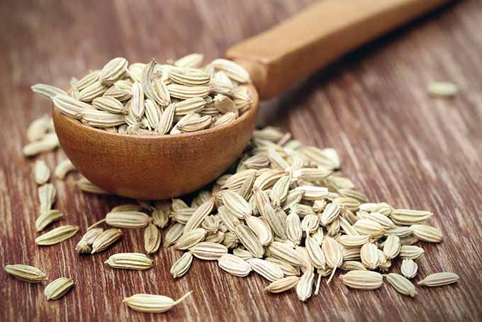 A Spoonful of Fennel Seed | Foodal.com