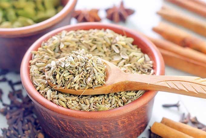 Dish of Fennel Seed | Foodal.com