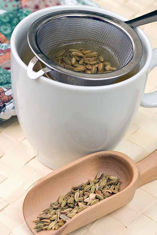 Did you know fennel seed's beneficial properties can help with various health issues, like digestive complaints? Read more now on Foodal, and get the recipe to make your own homemade fennel seed tea: https://foodal.com/knowledge/herbs-spices/fennel-seed/