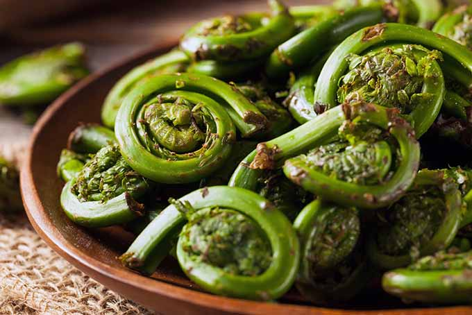 Cooked Fern Fiddleheads | Foodal.com