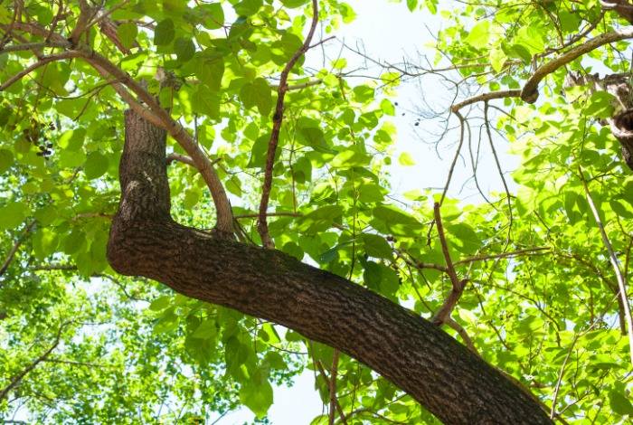 green spring days in nashville