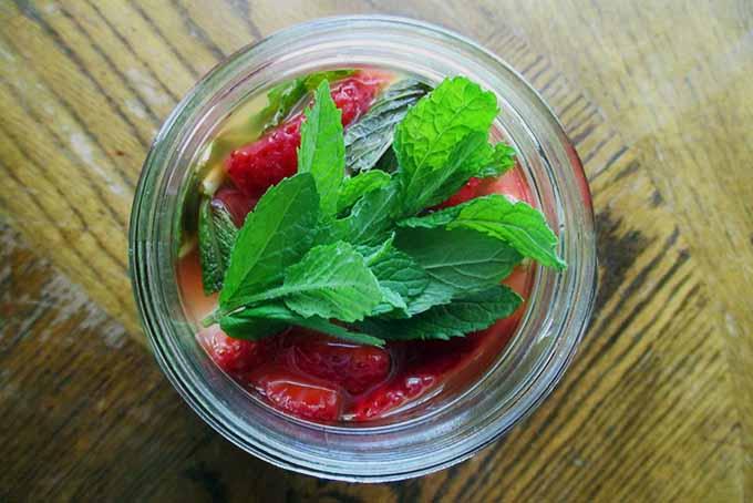 Shrub with Herbal Sprig | Foodal.com