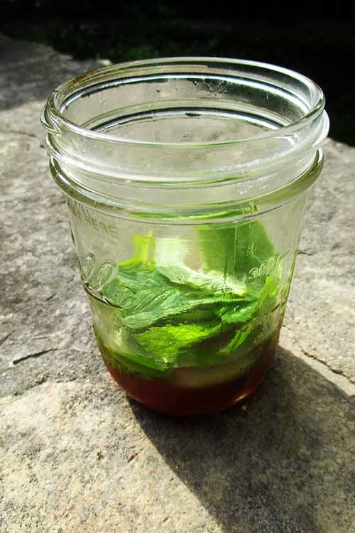 There's nothing better than cooling down with the season's finest: rhubarb and mint! Learn how to make this refreshing rhubarb mojito right now:
