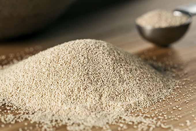 Organic Raw Yeast