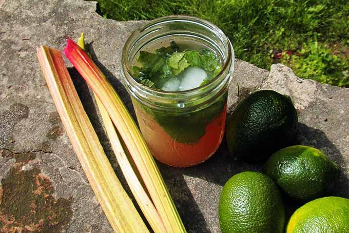 Mojito with Limes and Rhubarb | Foodal.com