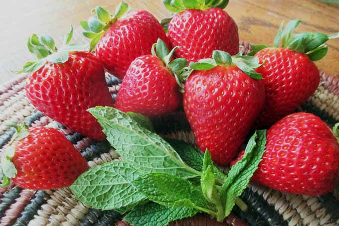 Strawberries and Mint | Foodal.com