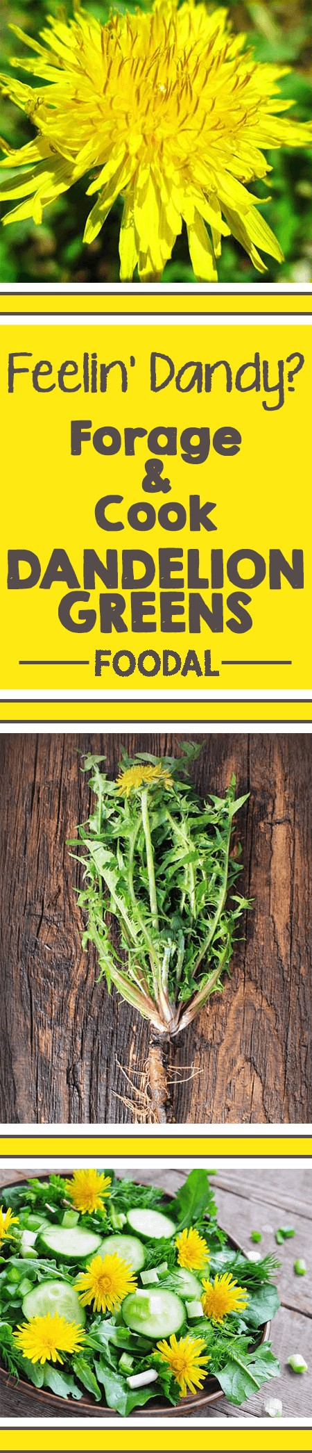 It's the much-feared yellow flower we all love to hate. While you might finding yourself watching dandelions eat up your yard and garden, don't forget that you have a great counterattack handy: eating them up! Learn some basics on foraging, buying, storing, cooking, and even the health benefits of harvesting this wild weed green now! https://foodal.com/knowledge/paleo/dandelion-greens/