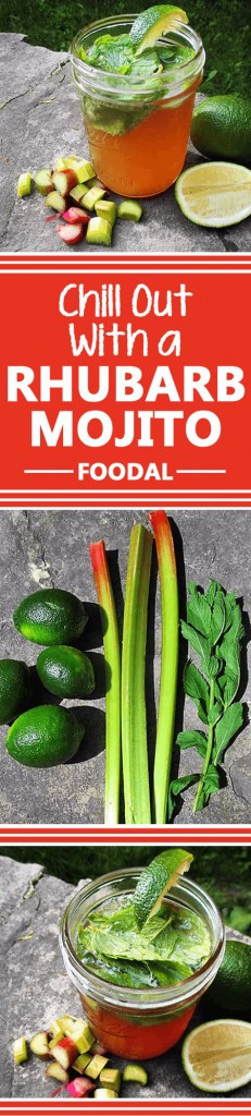 Could you imagine anything better than cooling down with the season's finest foods and ingredients? A great example: rhubarb and mint, in an irresistible rhubarb mojito! Refreshing menthol melds expertly with those sour rhubarb notes, like the two were made for each other. Learn how to craft this cocktail match made in heaven now! https://foodal.com/drinks-2/alcoholic-beverages/rhubarb-mojito/