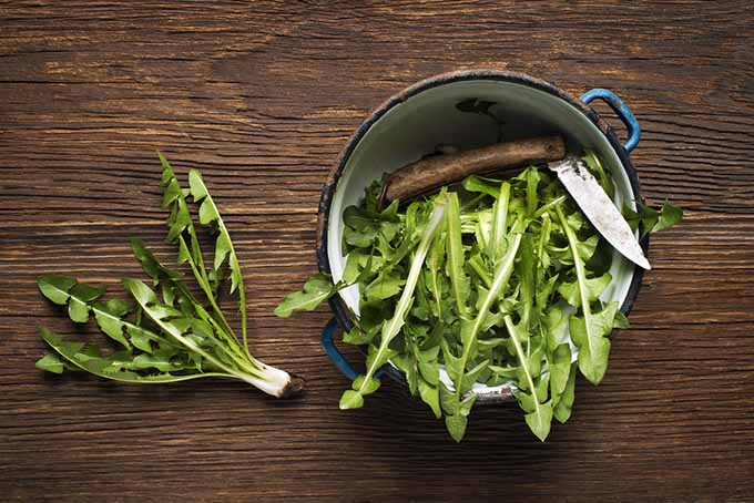Cooking Dandelion Greens | Foodal.com