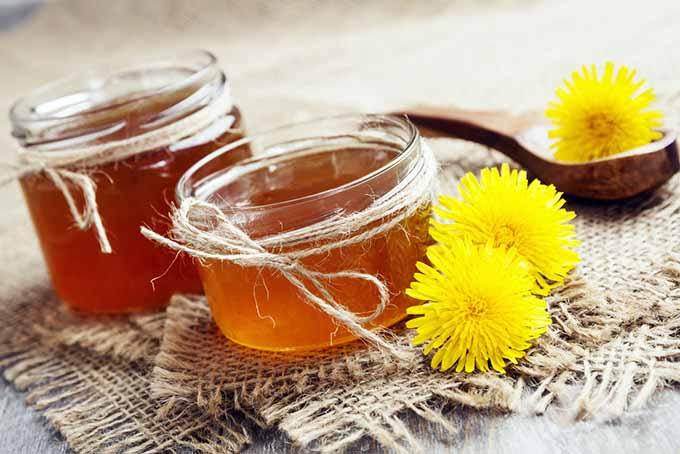 Dandelion Jelly | Foodal.com