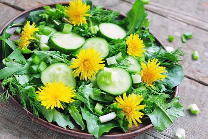 Dandelion Flower Salad | Foodal.com