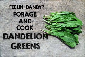 Feelin' Dandy? Forage and Cook Dandelion Greens