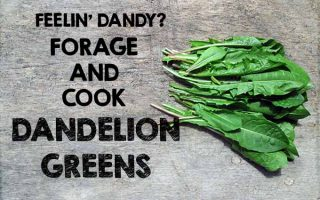 Dandelion Greens on Table | Foodal.com