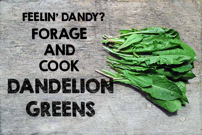 Dandelion Greens on Table | Foodal.com