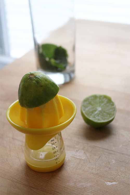 Lime juice and mint are key ingredients in any classic cocktail. Take your favorite warm-weather beverage to new heights with the addition of tangy tomatillo juice. Read more now on Foodal: https://foodal.com/drinks-2/alcoholic-beverages/tomatillo-mojito/