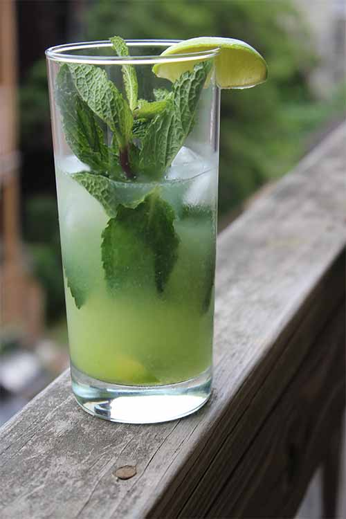 You know those green things that look like tomatoes with husks? They're tomatillos, and we're blending them up to make a tasty summertime cocktail. Get the recipe for Tomatillo-jitos on Foodal: http://foodal.com/drinks-2/alcoholic-beverages/tomatillo-mojito/