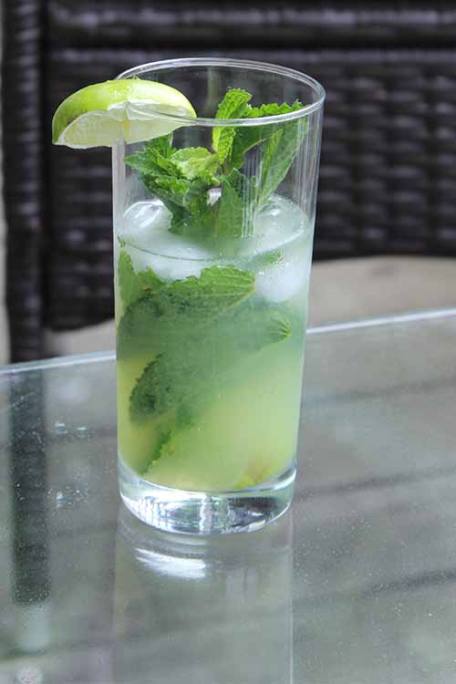 Love the tangy taste of fresh tomatillos? Blend them up, and add the juice to a refreshing mojito. Get the recipe on Foodal: https://foodal.com/drinks-2/alcoholic-beverages/tomatillo-mojito/
