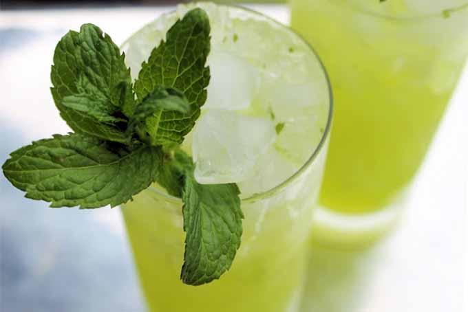 Honeydew Mojito | Foodal.com