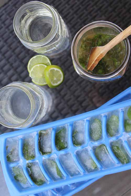 Want to up your mojito game? Our simple tricks can help! Read more now on Foodal: https://foodal.com/drinks-2/alcoholic-beverages/mojito-mint-lime-ice-tea/ ‎