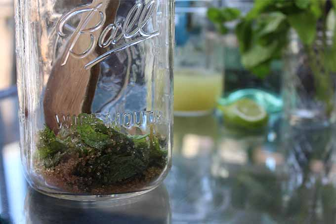 Muddling Mint and Sugar for Mojitos | Foodal.com