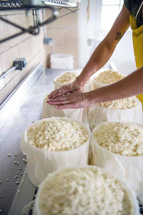 Learn all about artisanal cheesemaking and how you can apply tips from the pros in your own kitchen. Read more on Foodal: https://foodal.com/knowledge/paleo/7-lessons-learned-from-cheesemaker/