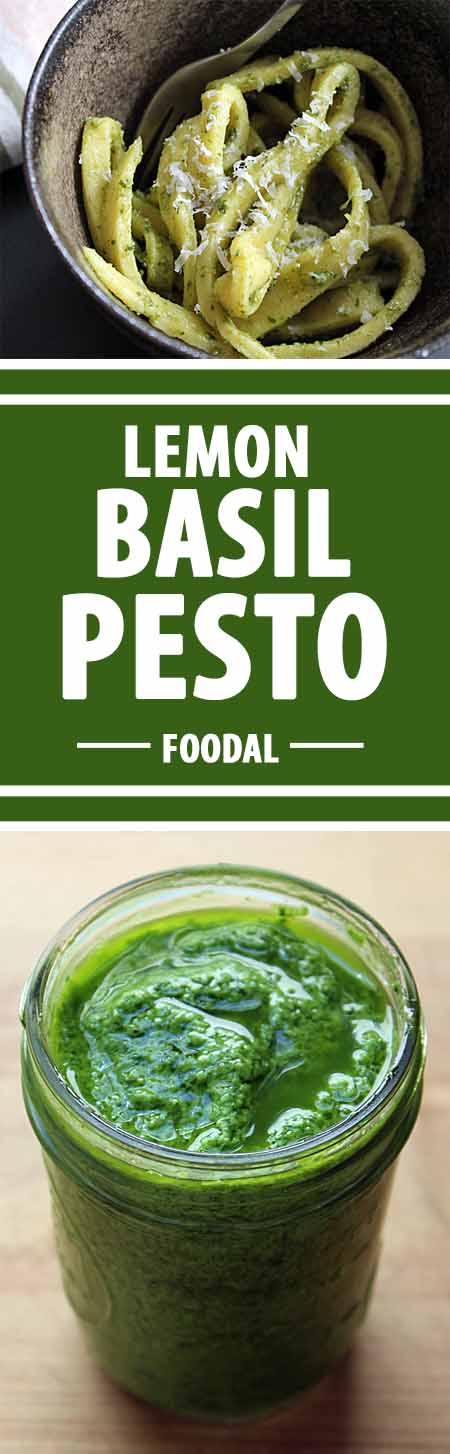 Top Your Pasta with This Homemade Lemon Basil Pesto | Foodal