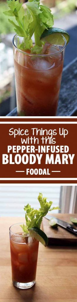 Forget everything you know about the Bloody Mary. Whether the infamous brunch drink is a go-to favorite or not, this recipe will blow your mind. Made with freshly pressed tomato and cucumber juice and spiked with a hot pepper-infused vodka, it is nothing like the thick red cocktail you've had before. Keep reading to find out more: https://foodal.com/drinks-2/alcoholic-beverages/pepper-infused-bloody-mary/